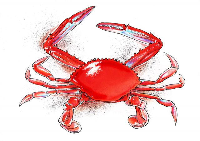 NATURE - Crab Resized