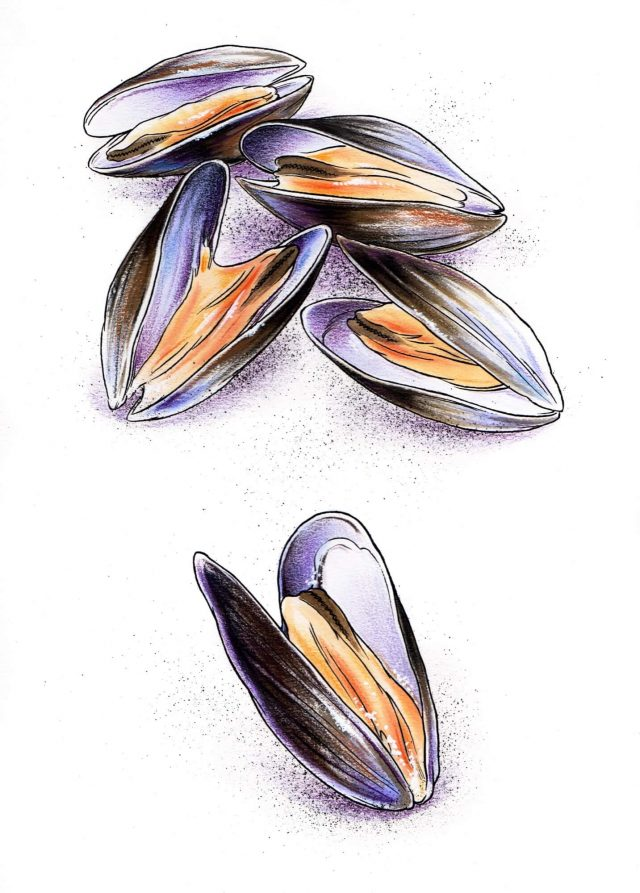 NATURE - Mussels Resized