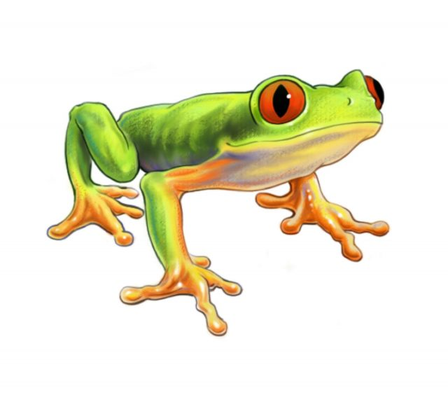 NATURE - tree frog