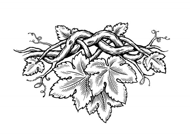 Vines in wood cut style