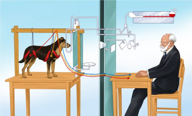 Pavlov's Dog experiment