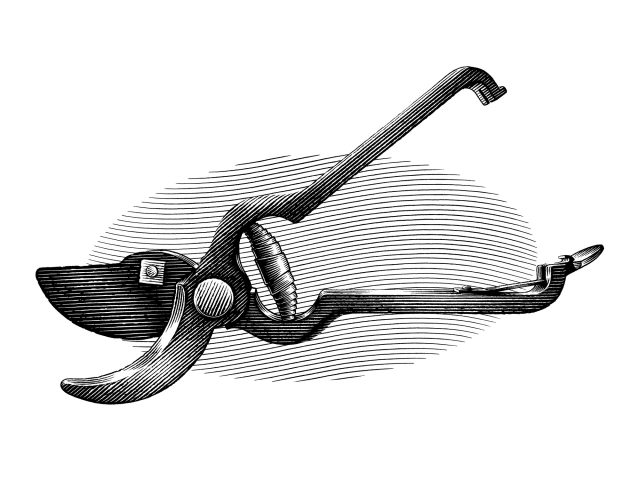 Line engraving style illustration of Vintage Gardening Secateurs